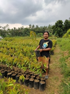 5 Keunggulan Durian Super Tembaga